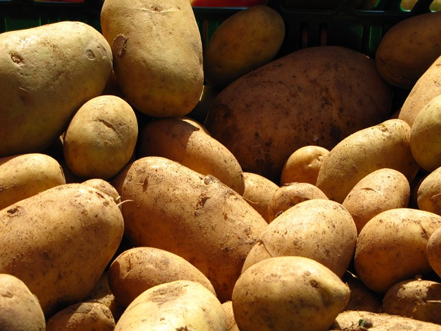 Das Genom der Kartoffel enthält etwa 39.000 Gene.