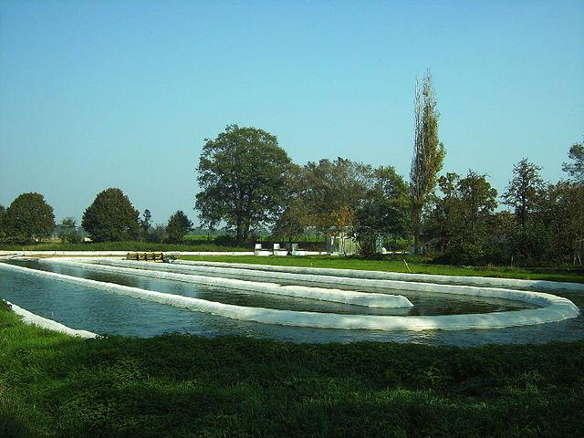 Für die landwirtschaftliche Nutzung werden Mikroalgen oft in offenen Teichanlagen gezogen. Dies ist zwar deutlich kostengünstiger, jedoch weniger produktiv.