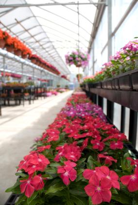 Gartenbauwissenschaft in größeren Gewächshäusern. (Quelle: © iStockphoto.com/Andrea_Hill)