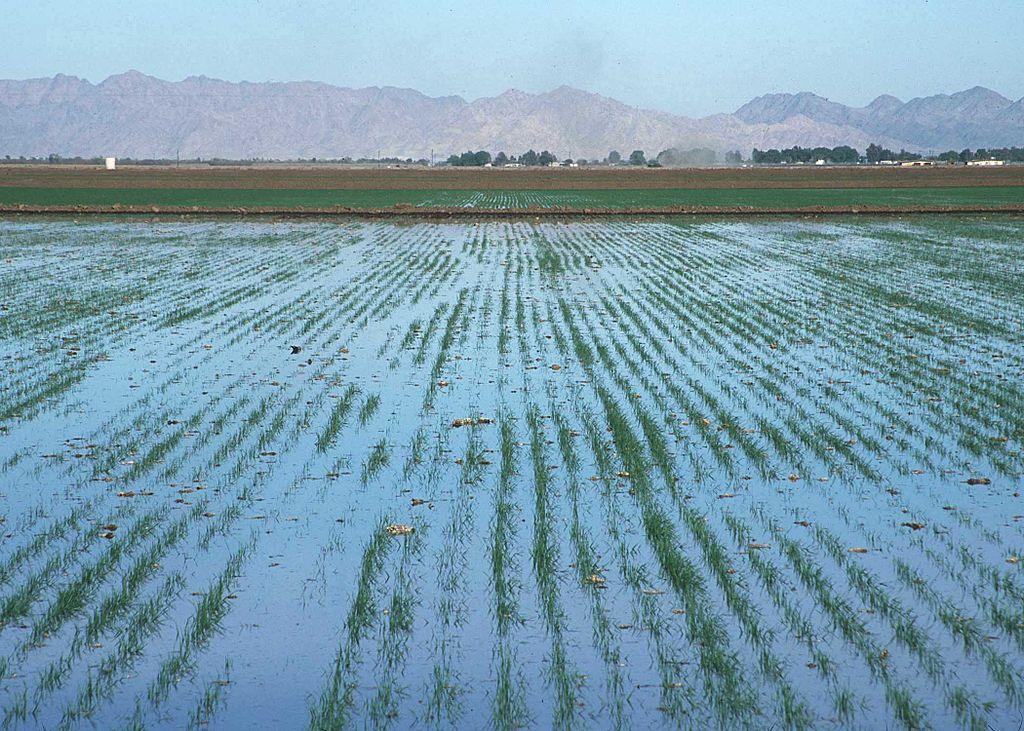 In ariden Regionen ist die künstliche Bewässerung einer der Hauptgründe für die Versalzung der Böden. Das nach der Verdunstung des Wassers zurückbleibende Salz hemmt Pflanzen in ihrem Wachstum und lässt die Erträge schrumpfen. Effektive Entwässerungssysteme sind daher von besonderer Bedeutung.