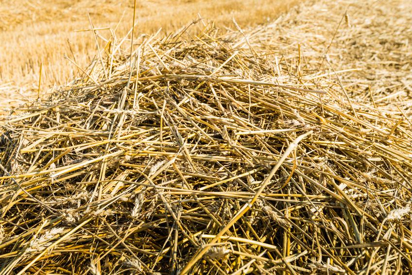 Bei der landwirtschaftlichen Produktion fallen auch große Mengen an Nebenprodukten wie zum Beispiel Stroh an. (Bildquelle: © Ruud Morijn/Fotolia.com)