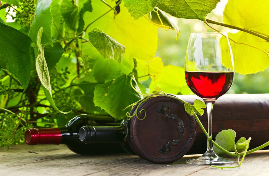 Nicht nur auf die Rebsorte und die Anbauregion kommt es an, auch die Bakterien, die auf den Trauben leben, können den Weingeschmack beeinflussen. (Bildquelle: © Igor Normann - Fotolia.com)
