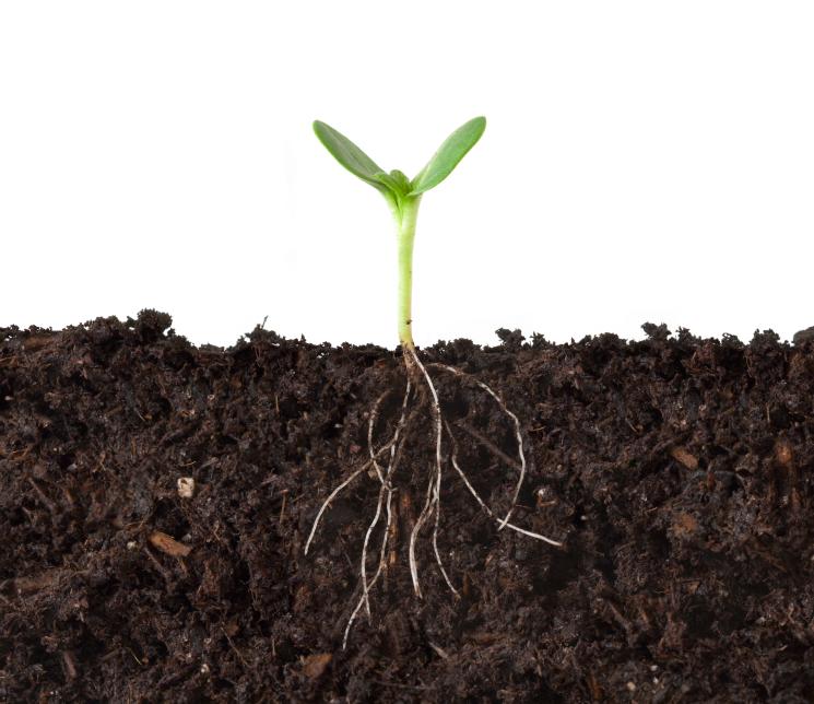 In der Rhizosphäre leben unzählige Mikroorganismen. Es ist der Teilbereich des Bodens direkt um die Pflanzenwurzeln herum.