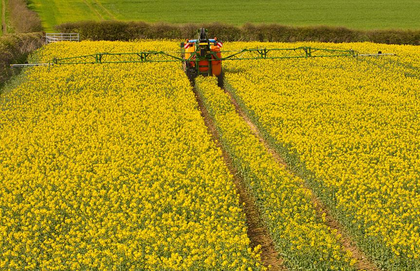 Forscher stellten fest, dass Landwirte, die mit neonicotinoidhaltigen Beizen behandeltes Rapssaatgut nutzten, weniger andere Insektizide im Herbst versprühten. (Bildquelle: © stocksolutions - Fotolia.com)