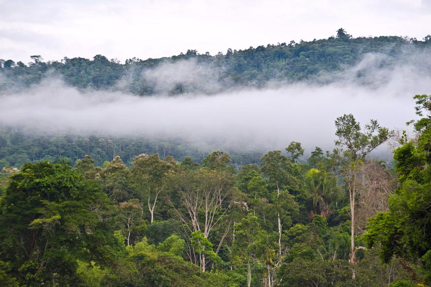 In ihrer Studie überwachte das Forscherteam die Blattveränderungen in den Baumkronen und die Photosyntheseleistung über den Verlauf eines Jahres an verschiedenen Standorten im Amazonas.