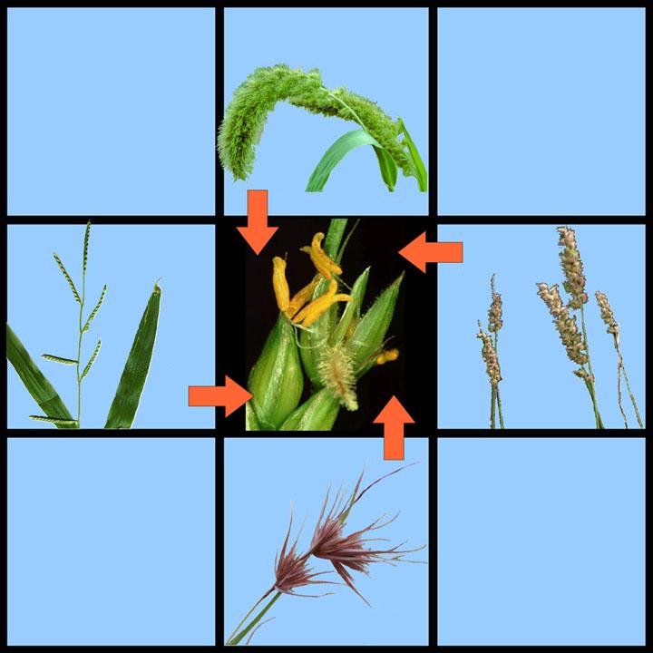 Abkürzung der Evolution? Durch horizontalen Gentransfer können auch entfernt-verwandte Arten Gene austauschen. Ein Mechanismus, der möglicherweise die Evolution vieler Pflanzeneigenschaften beschleunigte.