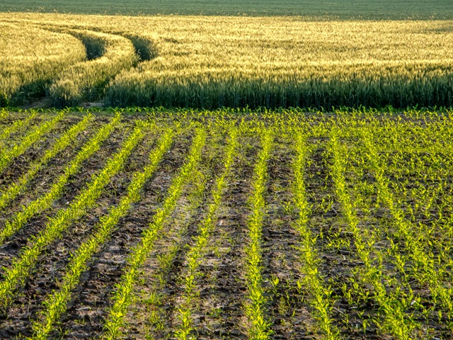 Die Landwirtschaft ist ein starker menschlicher Eingriff in die Naturlandschaft.
