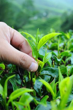 Nicht nur das Wachstum von Pflanzen wird durch Berührung beeinflusst. (Quelle: © gezzeg / Fotolia.com)