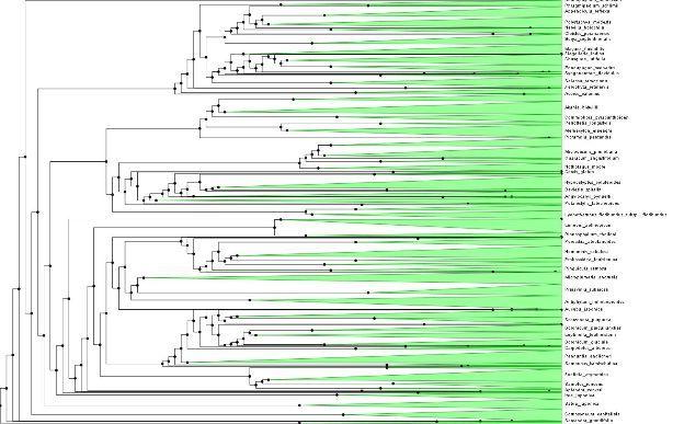 So sieht die Analyse großer Stammbäume aus: Ausschnitt des