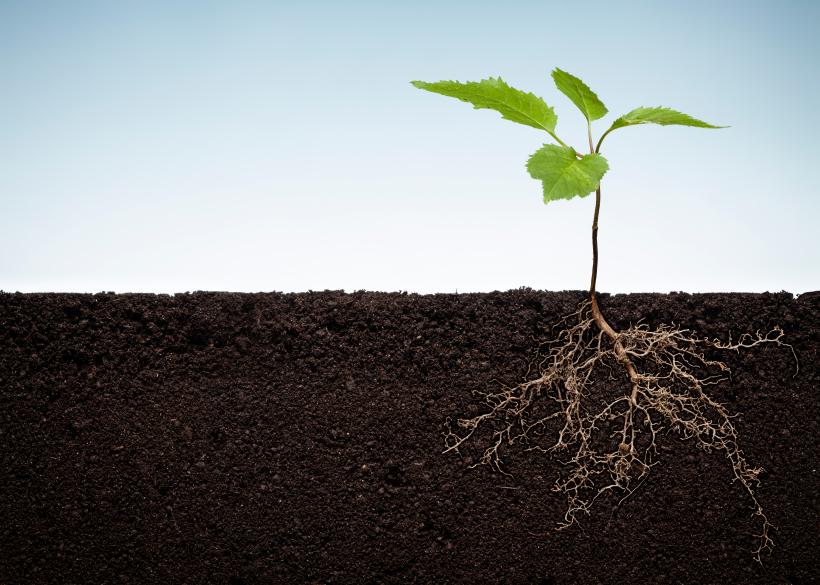 Pflanzen nehmen CO2 aus der Luft auf und wandeln es mittels Photosynthese in Kohlenhydrate um. Sterben die Pflanzen ab, werden die organischen Überreste von Mikroorganismen abgebaut und im Boden als Kohlenstoff-Vorrat gespeichert.