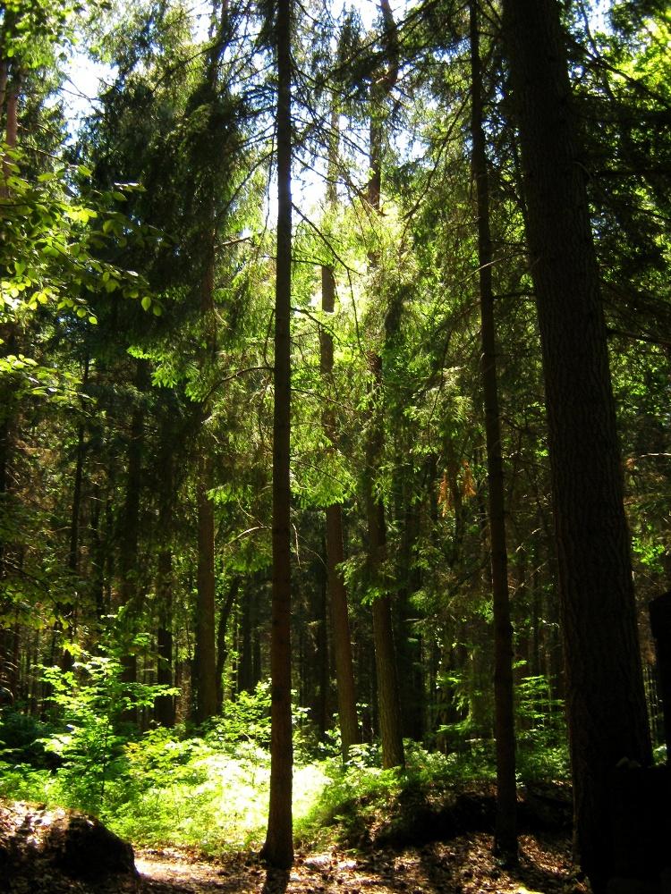 Wälder haben eine enorme weltweite Bedeutung (Quelle: © Pia Reyelt / PIXELIO www.pixelio.de)